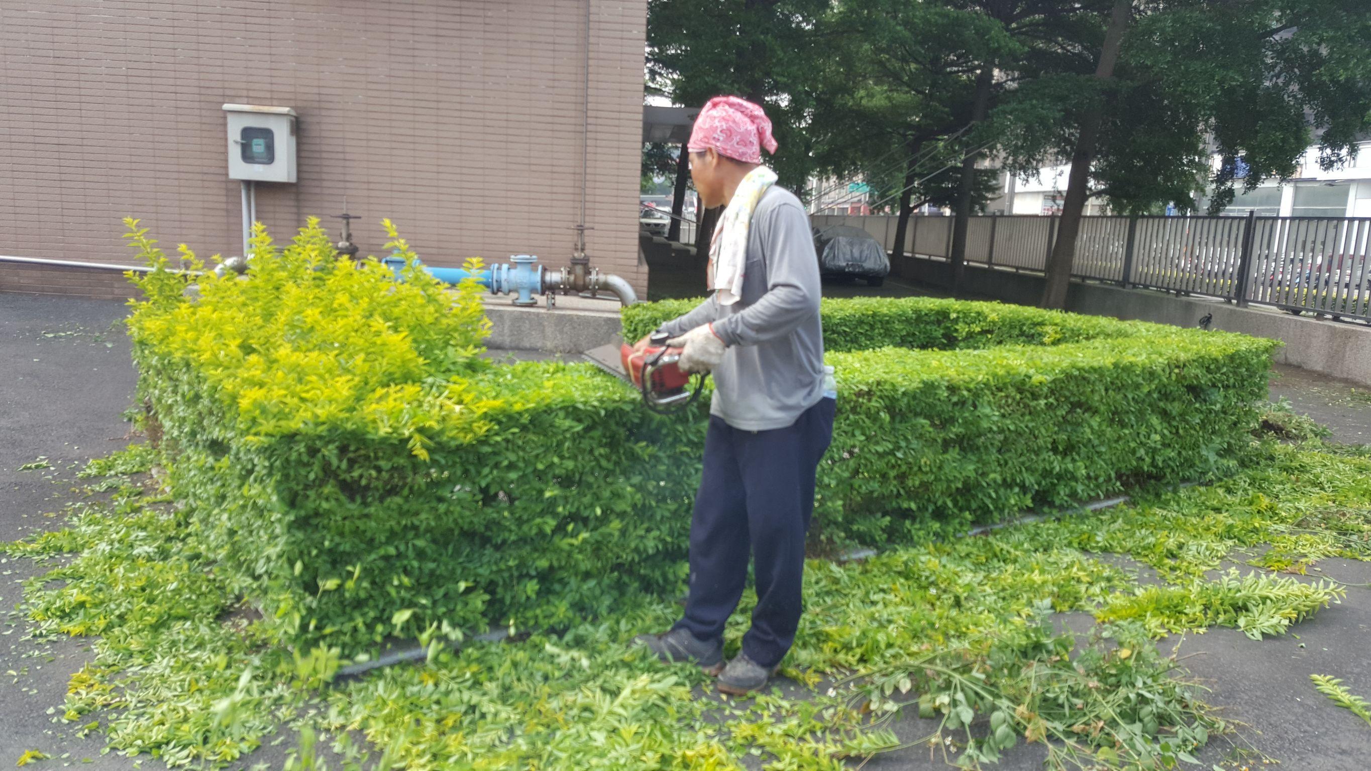 園藝消毒 (2)