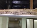 天花板夾層遭白蟻啃蝕嚴重