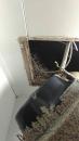 藏於住家廁所抽風機的白蟻巢