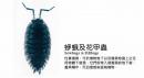 蛜蛾及花甲蟲