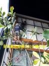 東亞藝術玻璃公司白蟻防治