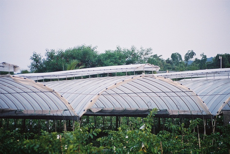 roof greenhouse.jpg