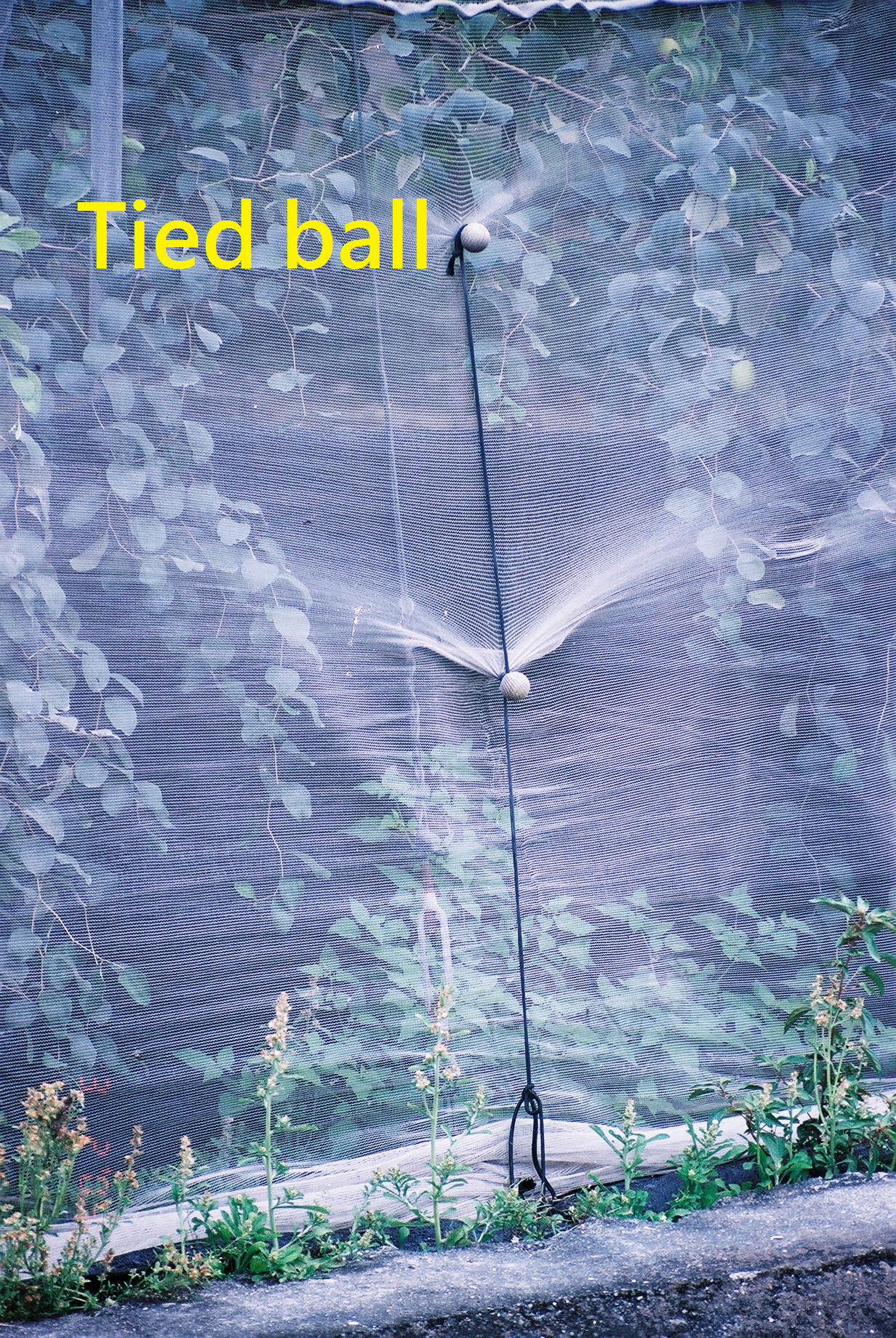 tied ball.png