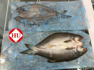 午仔魚(一夜干)-3