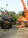 盆栽樹木吊掛 (4)