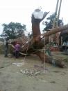 園藝樹木吊掛 (2)