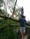 園藝樹木吊掛 (3)