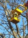 園藝樹木吊掛 (1)