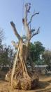 溪洲吊車 (4)