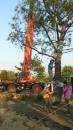 彰化園藝樹木吊掛 (5)