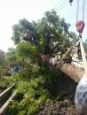 彰化樹木吊掛 (1)
