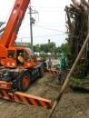 彰化園藝樹木吊掛 (4)