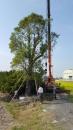 彰化樹木吊掛 (3)