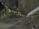 花蓮某大樓地下室漏水維修工程