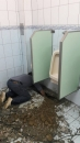 台中廁所改管路,台中水管管路變更