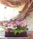 春節盆花 (10)