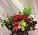 耶誕節盆花 (8)