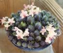 盆花 (2)