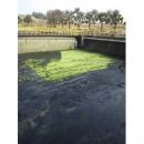 清污水池,清水溝