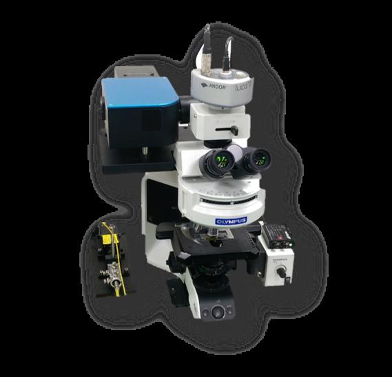 DeSCAN 快速成像雷射共軛焦顯微鏡