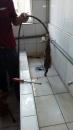 外勞宿舍水管疏通2
