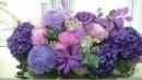 G062-紫色風華