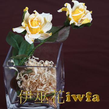 小盆花—俏麗 黃色