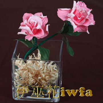 小盆花—俏麗 粉色