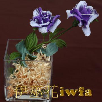 小盆花—俏麗 藍紫色