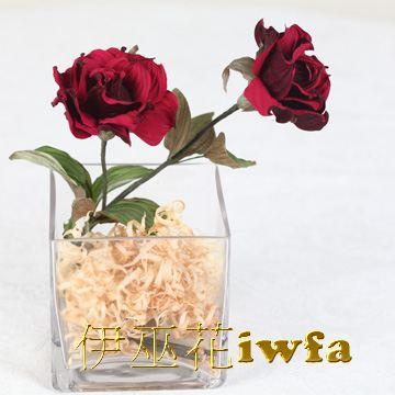 小盆花—俏麗 深紅色