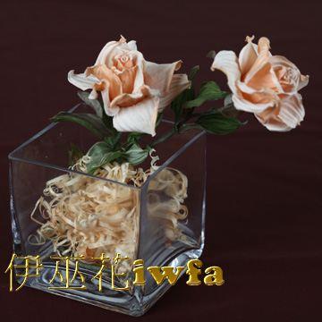 小盆花—俏麗 黃褐色
