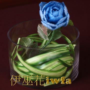 小盆花—百頁 寶藍色