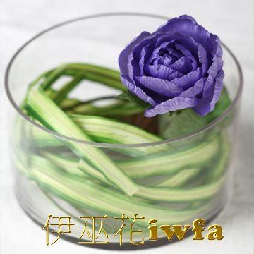 小盆花—百頁 暗紫色