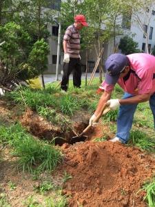 植栽維護施工
