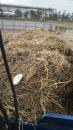 南投廢木材回收 (6)