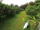 乾坤有機生態休閒農場26