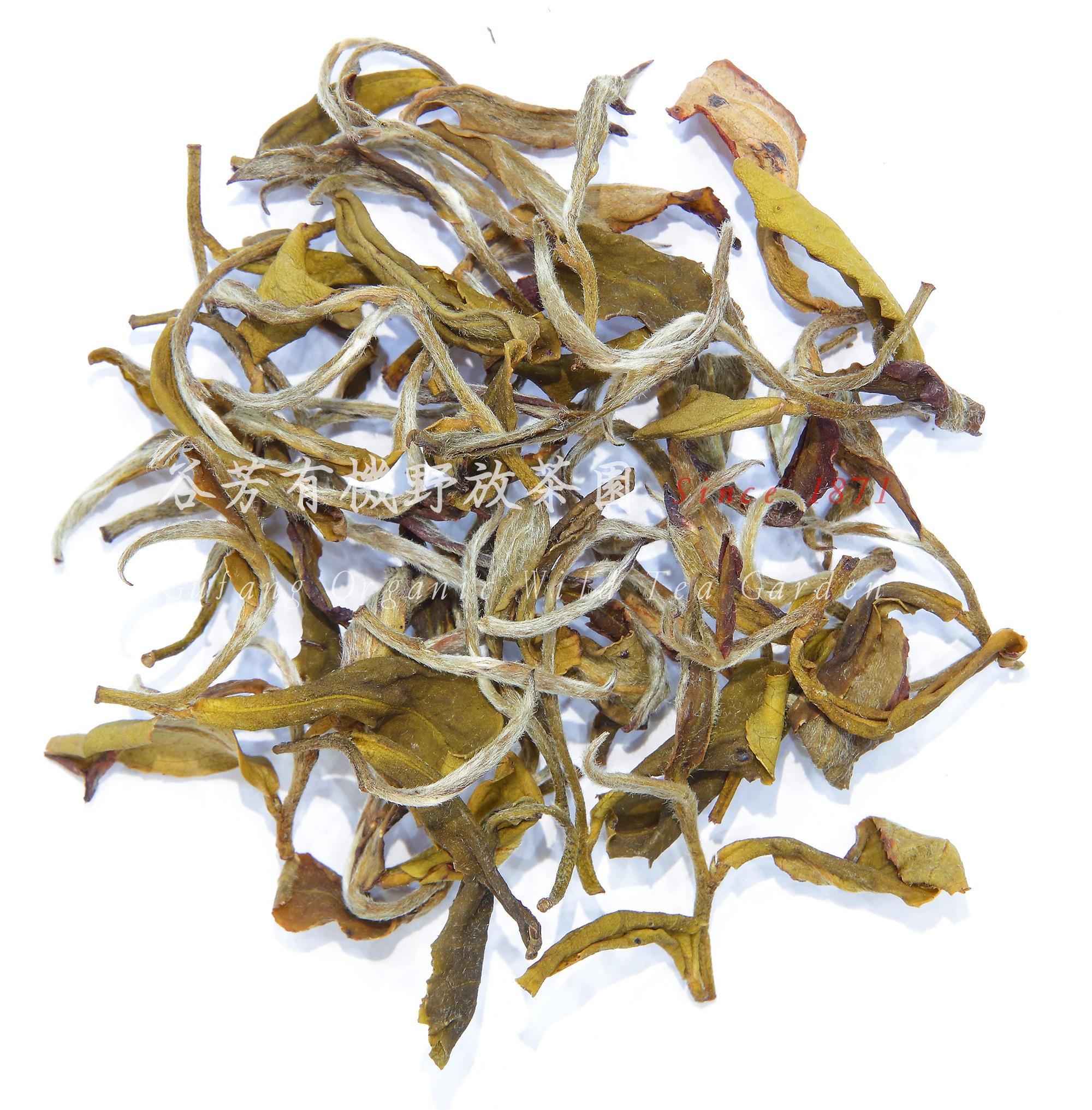 黃茶茶乾.jpg