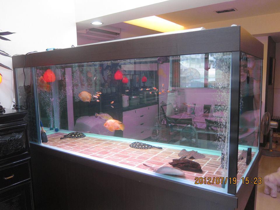 魚缸訂作-L夾木作魚缸