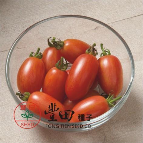 豐田205橢長型條紋蕃茄(深粉色帶橙色條紋)