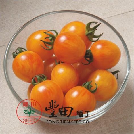 豐田207圓型條紋蕃茄(亮黃帶橘條紋)