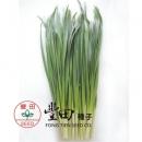 日本大葉韭菜