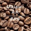 馬拉威AA 淺中烘/14點