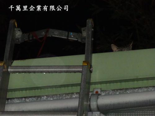 一支回收鋁梯和貓500.jpg